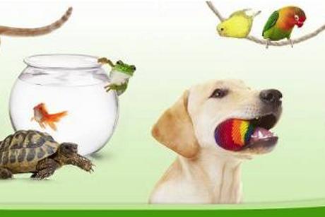 ZooPlus. Internetowy sklep dla psów i kotów